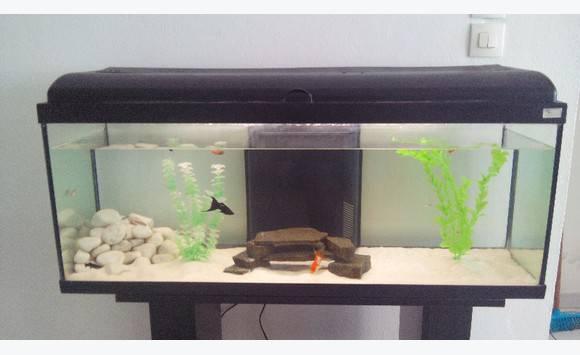 Aquarium meuble annonce meubles et d coration ducos for Aquarium meuble tv