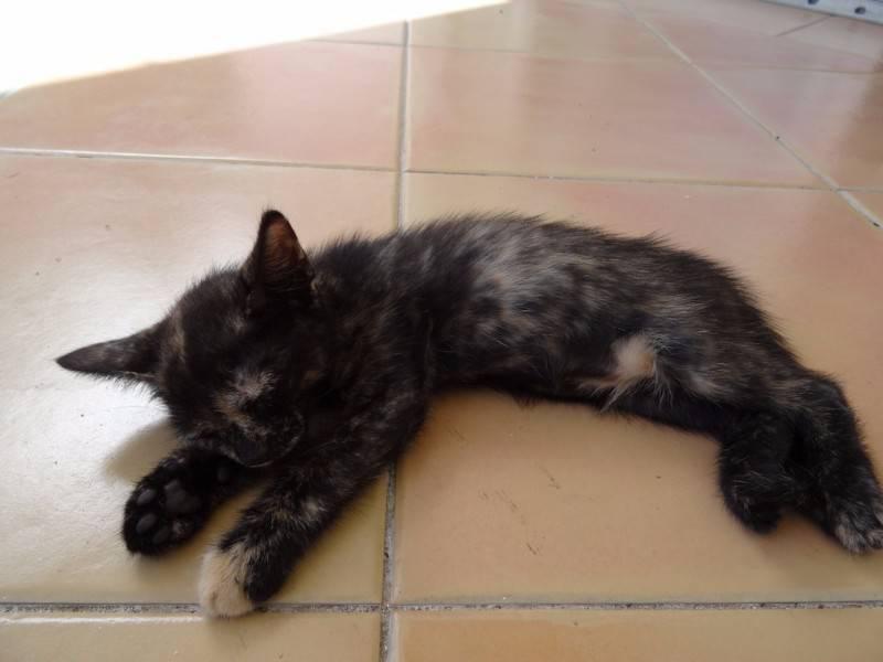 la baie chat Elevage de la baie noire : elevage de terre-neuve dans le département marne (51) - wamiz.