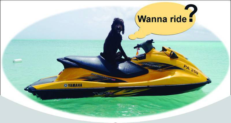 Yamaha waverunner classified ad water scooters jet for Yamaha water scooter