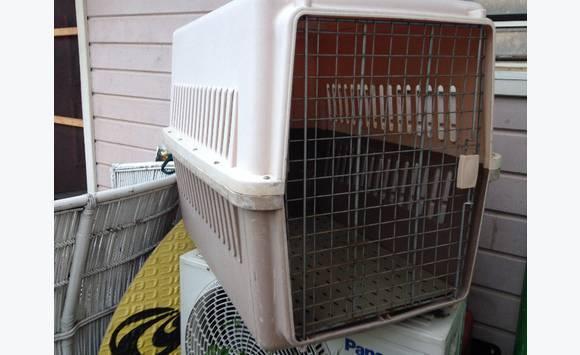 cage pour grand chien annonce chien concordia saint martin. Black Bedroom Furniture Sets. Home Design Ideas