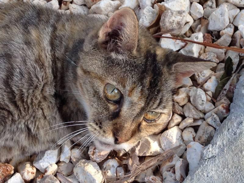 saint martin chat Livraison offerte sur arbre à chat trend saint-martin 114,5cm - paiement 3x par carte - 5€ de réduction sur votre première commande.