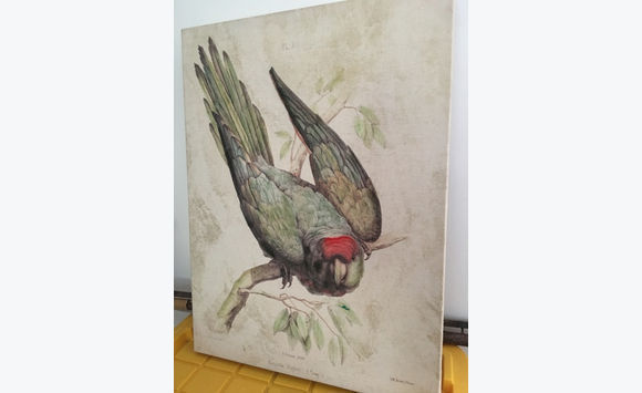 Large painting of Bird