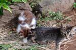 Donne 2 adorable chatons (gratuit)